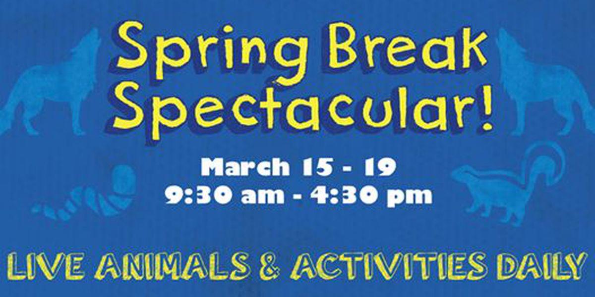 Don Harrington Discovery Center ofrecerá actividades durante las vacaciones de Spring Break