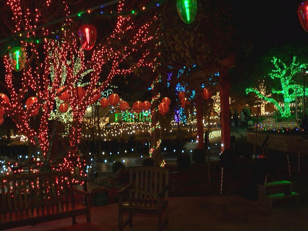 Jardín Botánico comienza hoy exposición de luces navideñas. No se lo puede perder!