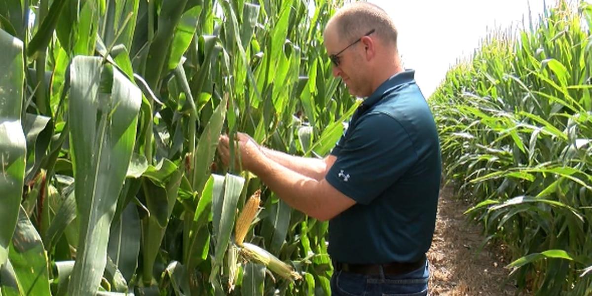 Escuela de Dalhart usando granja para recaudar dinero y educar a estudiantes sobre agricultura