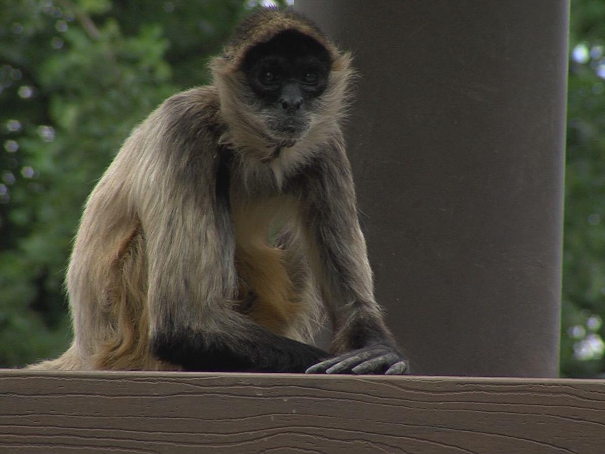 El zoológico de Amarillo ofrece eventos por primera vez desde que comenzó la pandemia