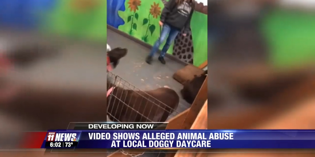 'You don't bite other puppies, idiot!': Video shows doggy daycare owner hitting dog with stick