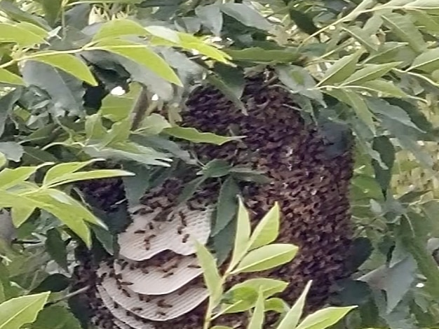 Woman attacked by bees after wind blows beehive off tree, onto her head