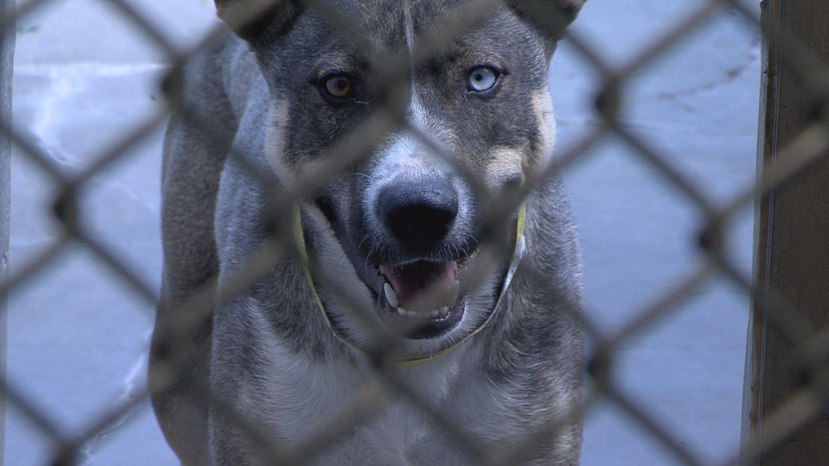 Programa nuevo para reducir la población de perros y gatos en Amarillo